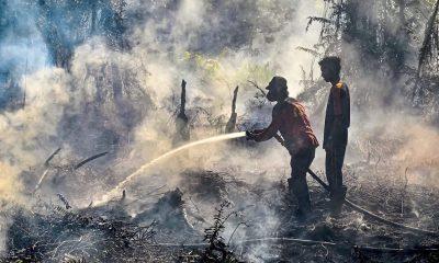 Indonesian bill an environmental, economic disaster