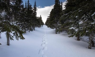 These are the best snowshoeing trails in Ontario. Here's how to explore them